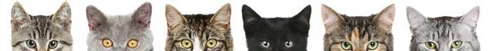 afnp-banniere-chats