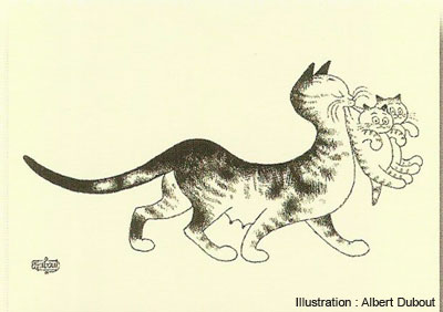 Transport de chatons