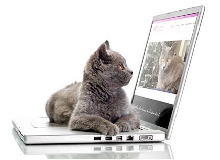 Pixeliart.fr : création de sites web pour éleveurs de chats