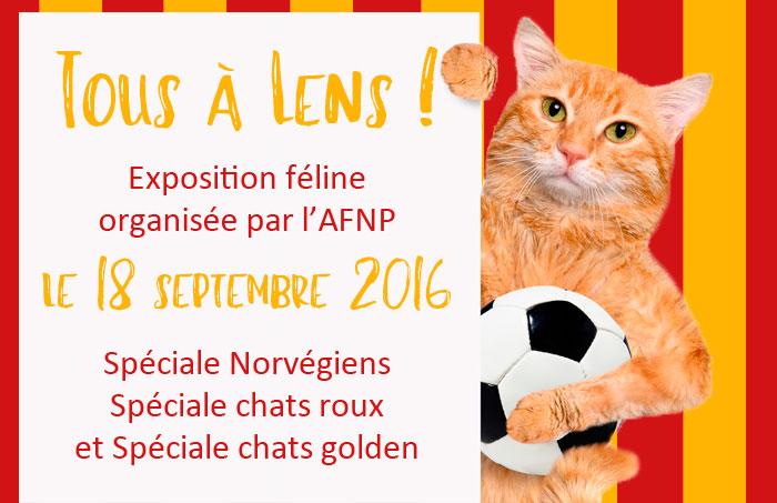 expositionde l'AFNP à Lens, septembre 2016, spéciales norvégiens, chats roux et chats golden