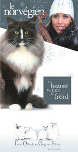 Spéciale chat Norvégien à l'exposition de l'AFNP à Lens